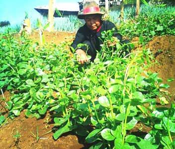 Pertanian Organik ala Cipta Mandiri